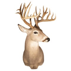 Non Typical Whitetail Deer Mount