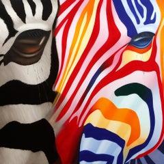 Zebra Désir