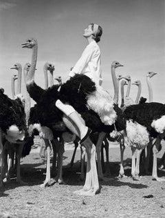 Wenda and Ostriches