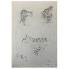Ocelot Drawing, Guido Righetti, 1919