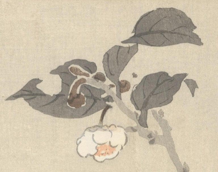 Ohara Koson, Original Japanese Woodblock Print, Camelia, Bird, Ukiyo-e, Spring For Sale 3