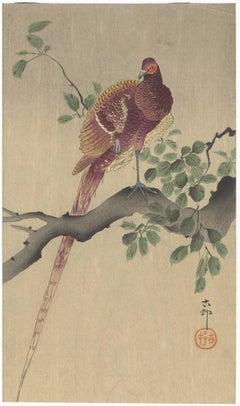 Shin-Hanga, Ohara Koson, Bird & Flower, Japanese Woodblock Print