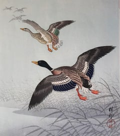 White Fronted Geese Flying above Reeds and Water.