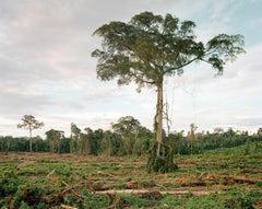 Deforestation of Primary Forest, Central Kalimantan - Olaf Otto Becker