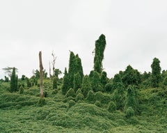 Ghost Trees after Deforestation, Malaysia 10/2012 - Olaf Otto Becker