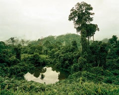 Primary Forest 02, Lake, Malaysia, 10/2012 - Olaf Otto Becker