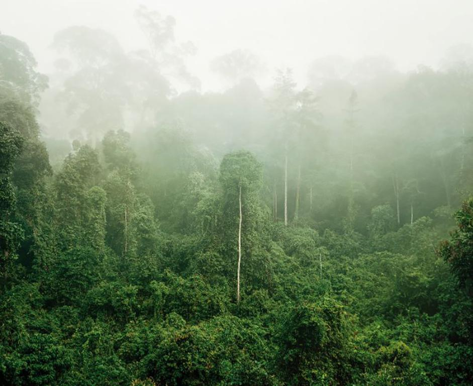 Primary Forest 03, Malaysia, 10/2012 - Olaf Otto Becker