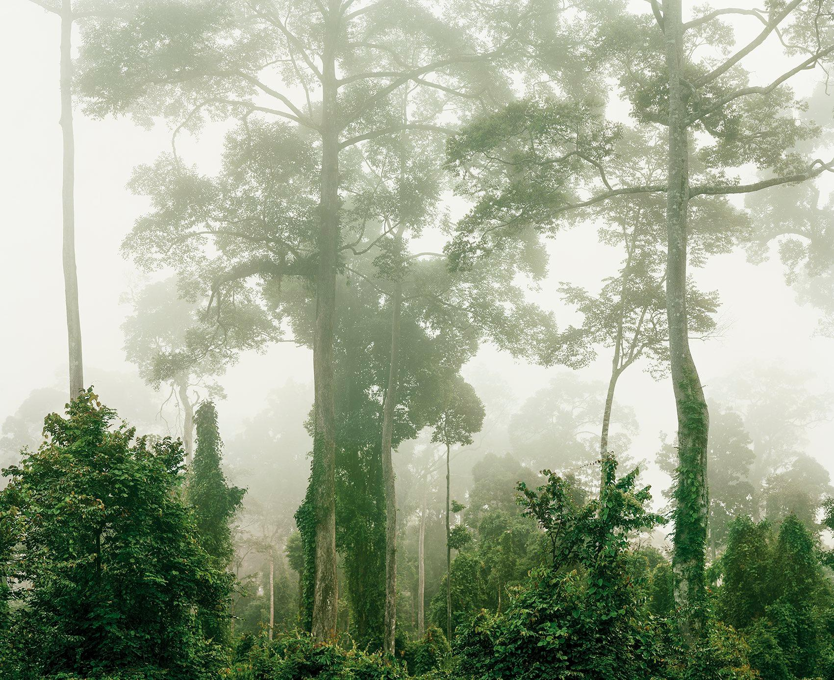 Primary Forest 06, Malaysia 10/2012 - Olaf Otto Becker