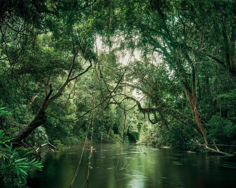 Primary Forest 1, Waterway, Malaysia 11/2013 - Olaf Otto Becker - Photograph by Olaf Otto Becker
