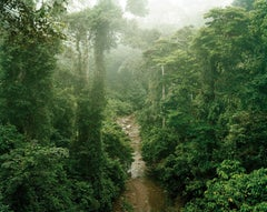 Primary Forest 11, Malaysia 10/2012 - Olaf Otto Becker
