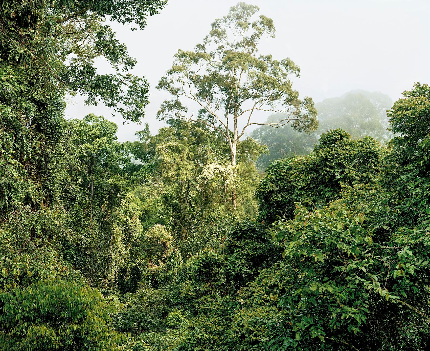 Primary Forest 7, Malaysia 10/2012 - Olaf Otto Becker