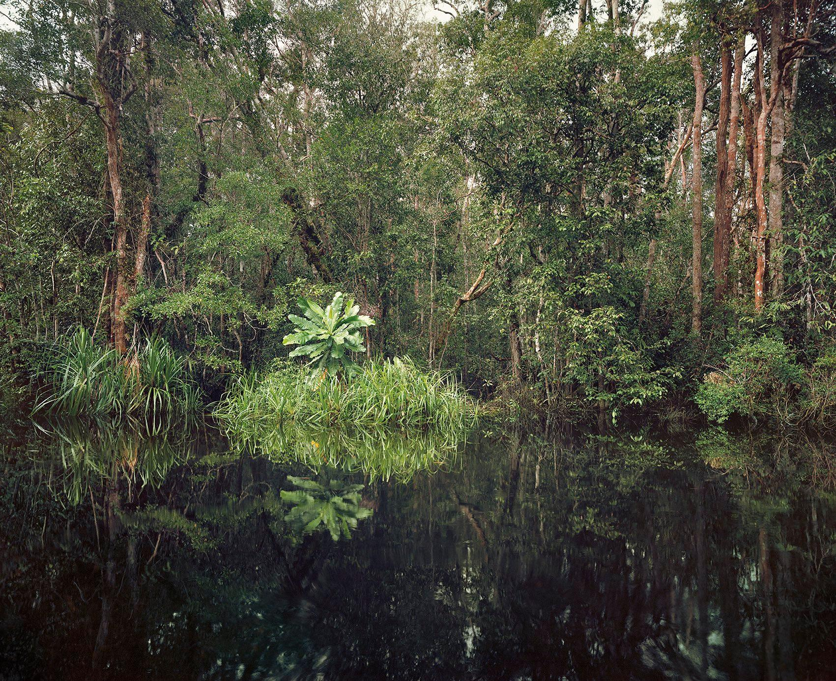 Primary Swamp Forest 01, Black Water, Kalimantan, Indonesia - Olaf Otto Becker