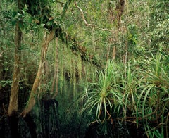 Primary Swamp Forest 04, black water, South Kalimantan - Olaf Otto Becker