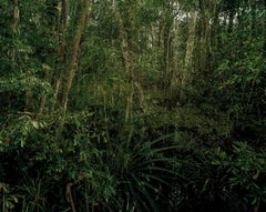 Primary Swamp Forest 06, late dusk, Indonesia 03/2012 - Olaf Otto Becker