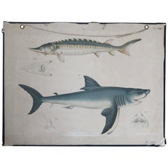 Old School Chart, Fish Species, 1960s