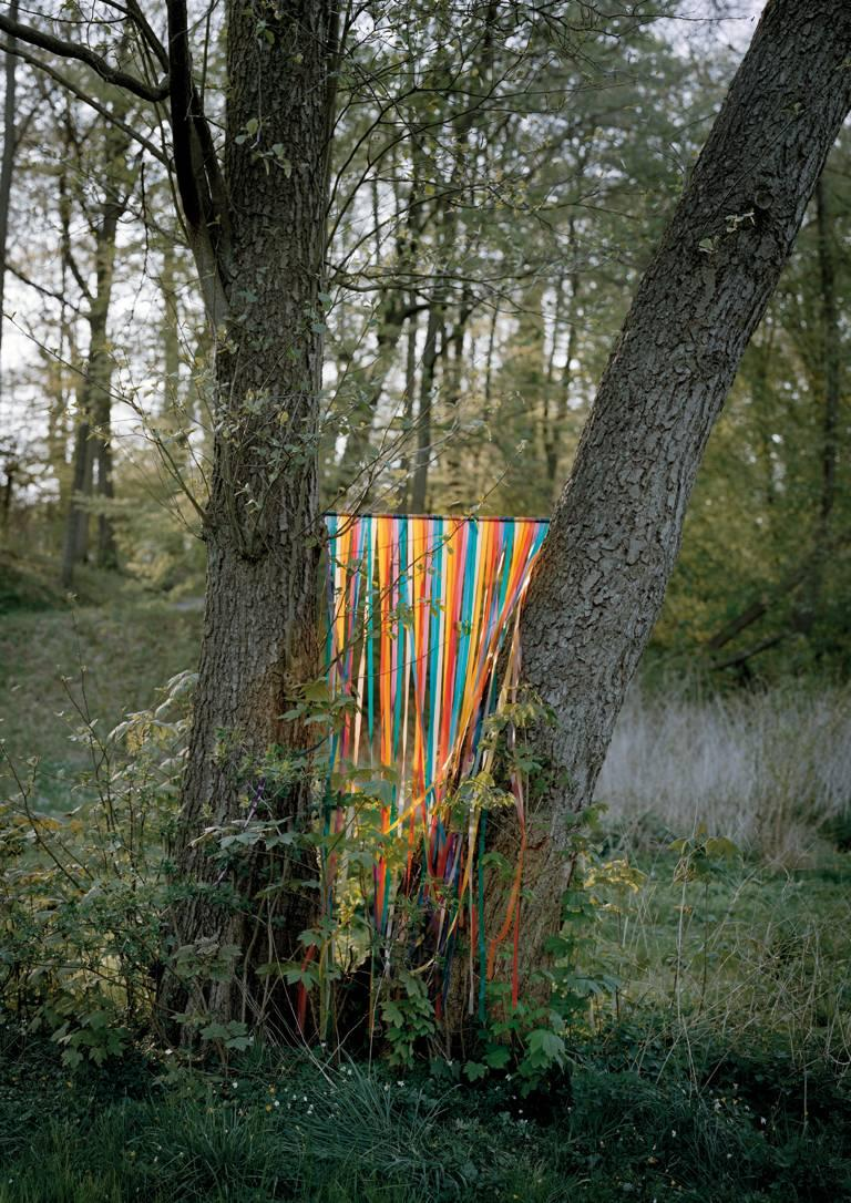 Contemporary Photography: Ribbon Tree
