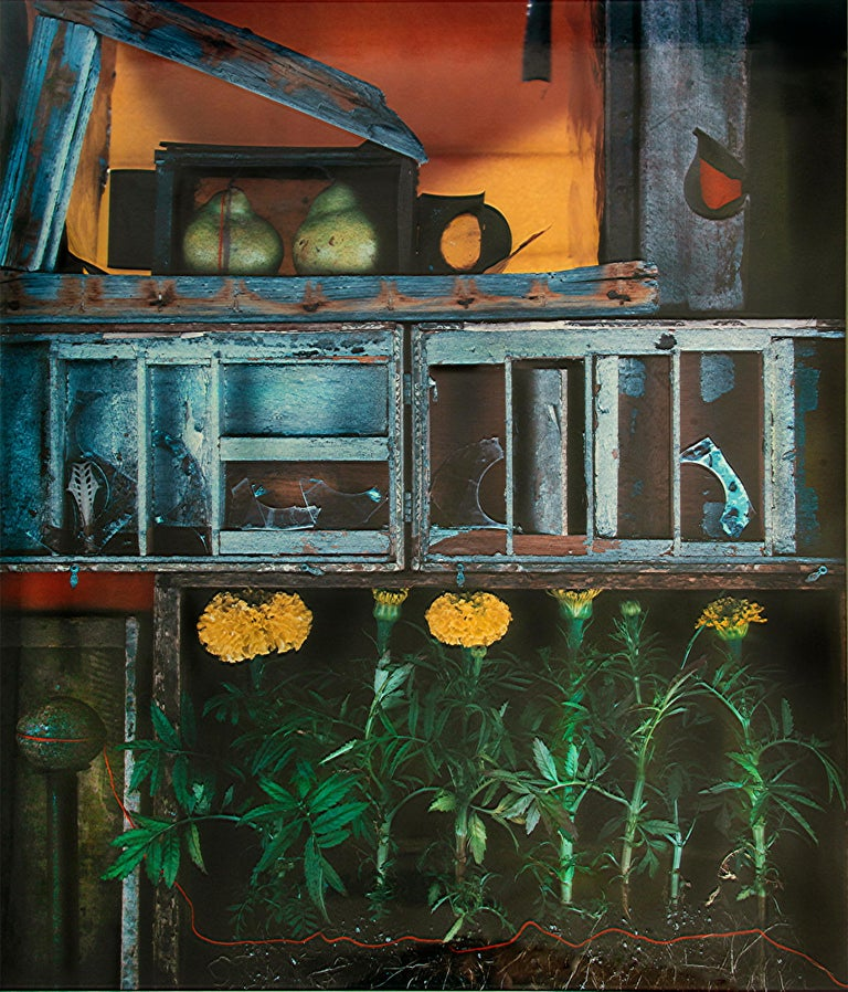 Olivia Parker Color Photograph - Cellar Marigold  Dandelion