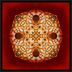 """""""Pépite 2"""", Gold Nugget on Red Semi-abstract Printed Photography on Dibond Panel"""