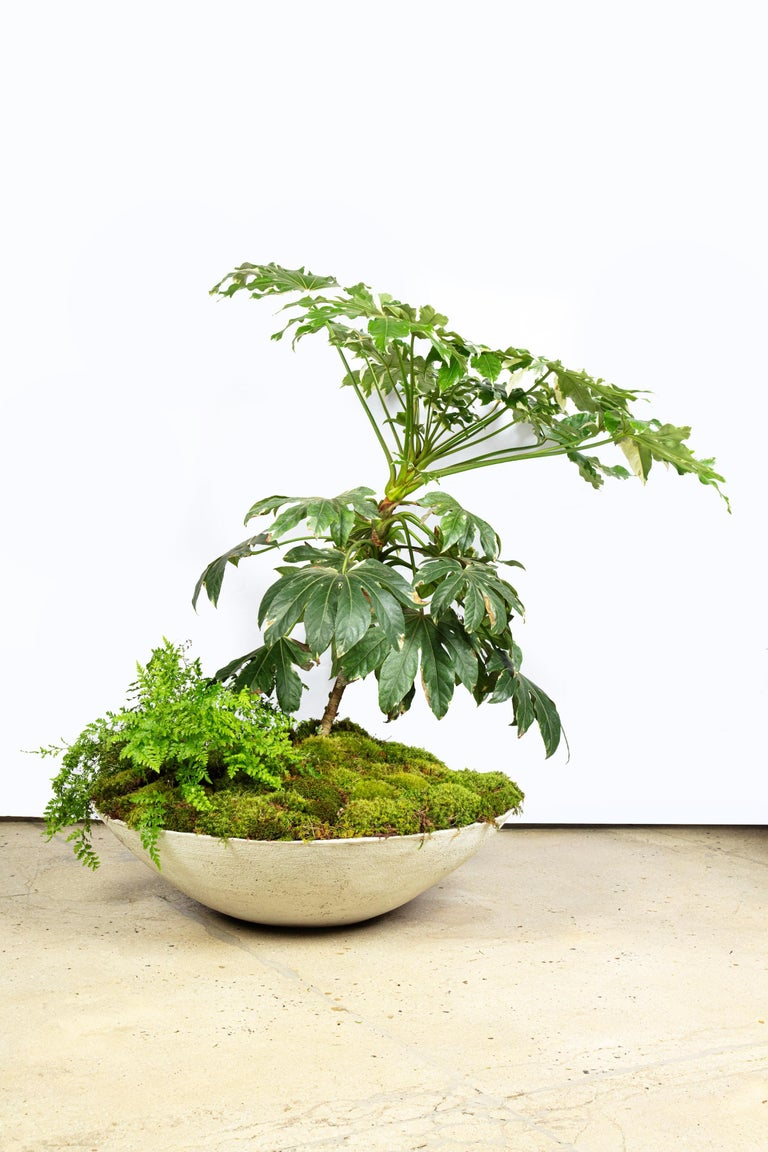 Modern Ukiyo Saucer, Concrete Planter by OPIARY (D11.5