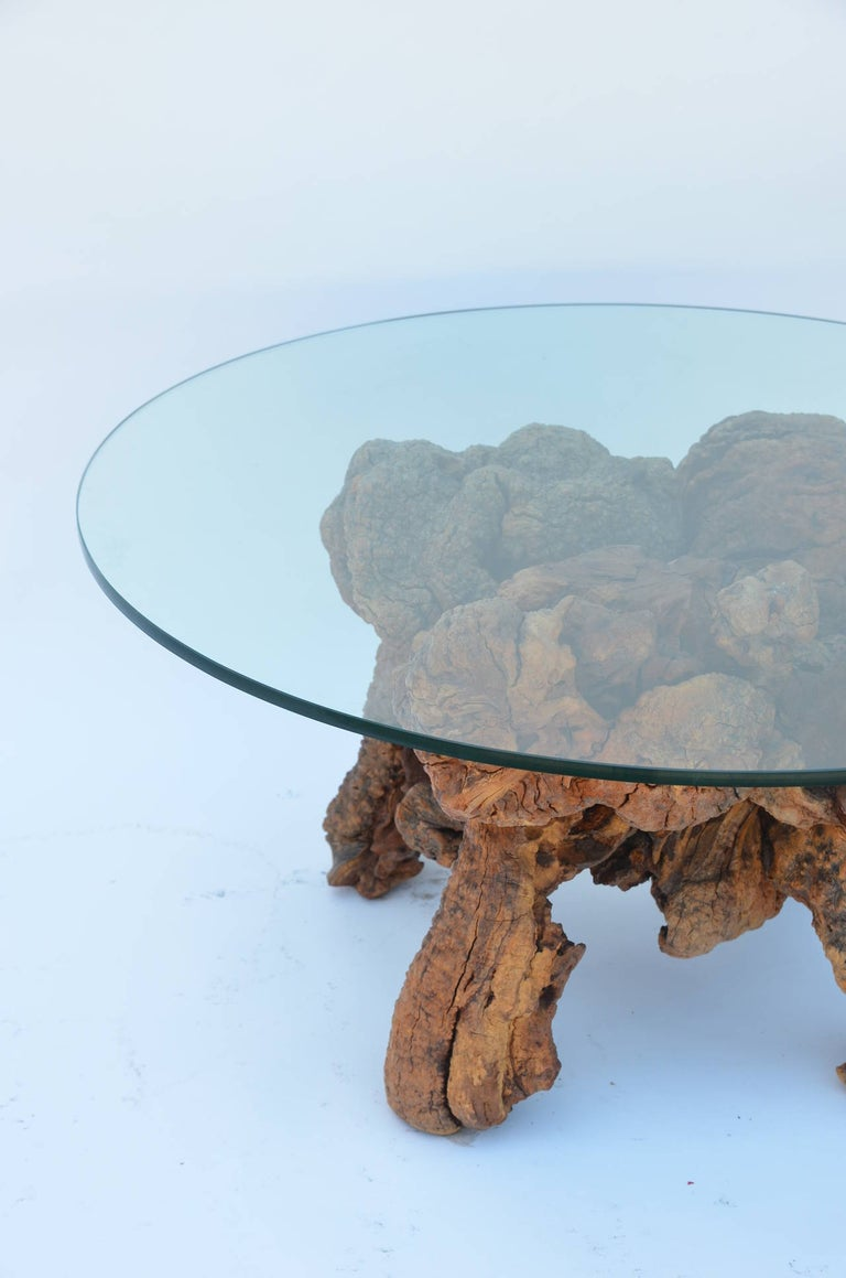 Organic Modern Quadripod Bog Wood and Glass Coffee Table In Good Condition For Sale In Los Angeles, CA