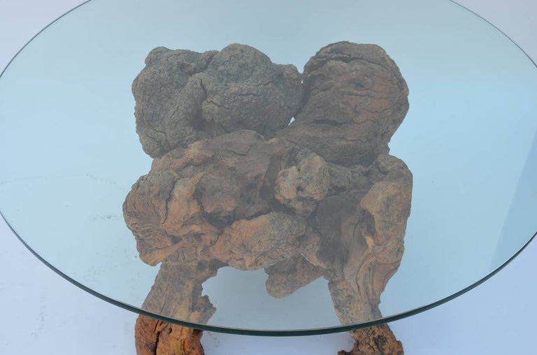 20th Century Organic Modern Quadripod Bog Wood and Glass Coffee Table For Sale