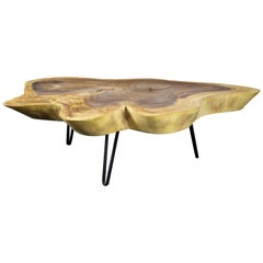 Organic Modern Suar Tree Coffee Table on Black Metal Feet