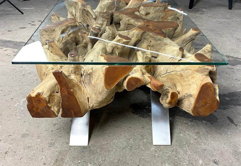 Stainless Steel Organic Modern Teak Root Coffee Table with Safety Glass Plate For Sale