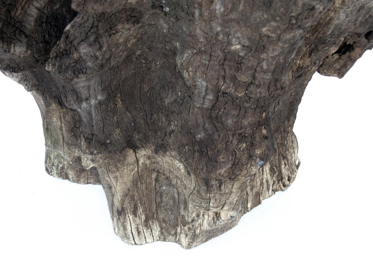 Organic Studio Sculptural Tree Trunk Root Chair from Belgium For Sale 3