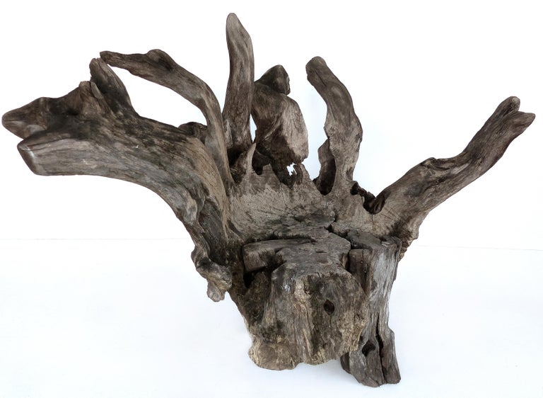 Organic studio sculptural tree trunk root chair from Belgium.  Offered for sale is an organic and rustic artist crafted sculptural tree trunk wood specimen that has been formed into a seat. The piece was acquired by the previous owner in Belgium.