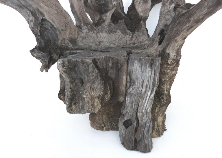 Contemporary Organic Studio Sculptural Tree Trunk Root Chair from Belgium For Sale