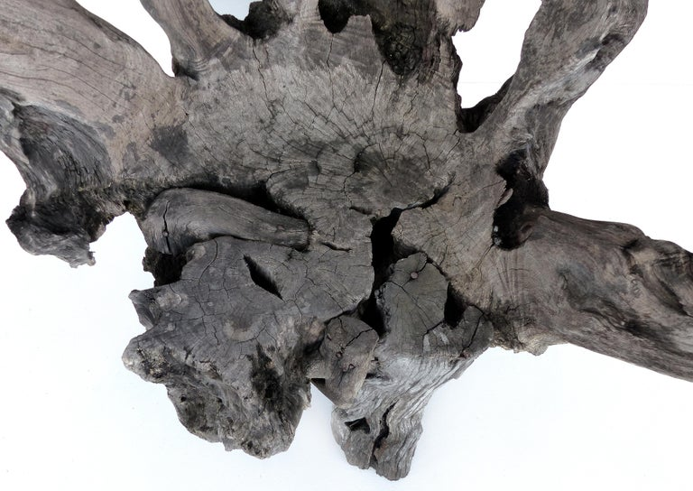 Organic Studio Sculptural Tree Trunk Root Chair from Belgium For Sale 1