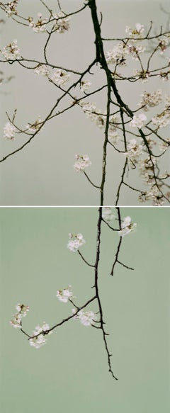 Hiroshima Now, Leaning Towards Water (Diptych)