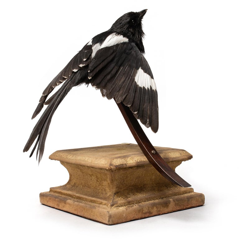 'Stills from a Courtship Dance' is a series of fine taxidermy works with smaller exotic (rare) birds. Sinke and van Tongeren created this series of birds as if they suddenly seemed frozen during the lascivious work put into their mating