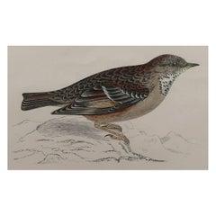 Original Antique Bird Print, the Alpine Accentor, circa 1870
