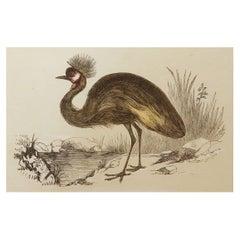 Original Antique Bird Print, the Balearic Crane, Tallis, circa 1850