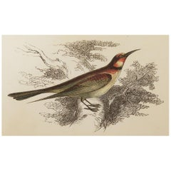 Original Antique Bird Print, the Bee-Eater, Tallis circa 1850