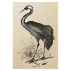 Original Antique Bird Print, the Crane, Tallis, circa 1850