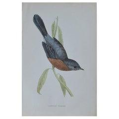 Original Antique Bird Print, The Dartford Warbler, circa 1850