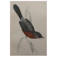 Original Antique Bird Print, the Dartford Warbler, circa 1870