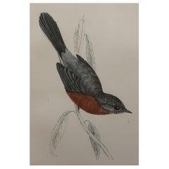 Original Antique Bird Print, the Dartford Warbler, circa 1870