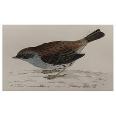 Original Antique Bird Print, the Dunnock, circa 1870