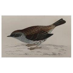 Original Antique Bird Print, the Dunnock, circa 1870