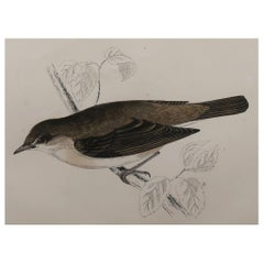 Original Antique Bird Print, the Garden Warbler, circa 1870