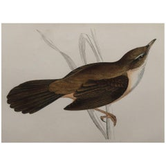 Original Antique Bird Print, the Great Sedge Warbler, circa 1870