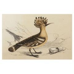 Original Antique Bird Print, the Hoopoe, Tallis, circa 1850