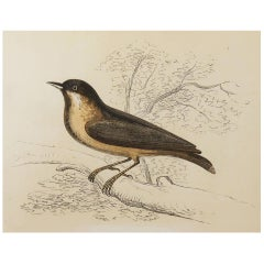 Original Antique Bird Print, the Nuthatch, Tallis, circa 1850