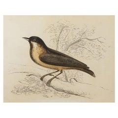 Original Antique Bird Print, the Nuthatch, Tallis, circa 1850