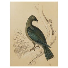 Original Antique Bird Print, the Roller, Tallis circa 1850