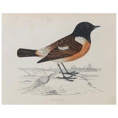 Original Antique Bird Print, the Stonechat, circa 1870