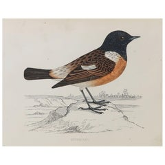 Original Antique Bird Print, the Stonechat, circa 1870